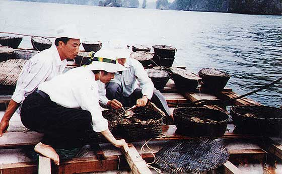 Oyster Farming photo image