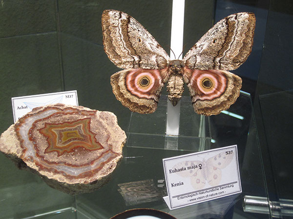 India Exhibit photo image