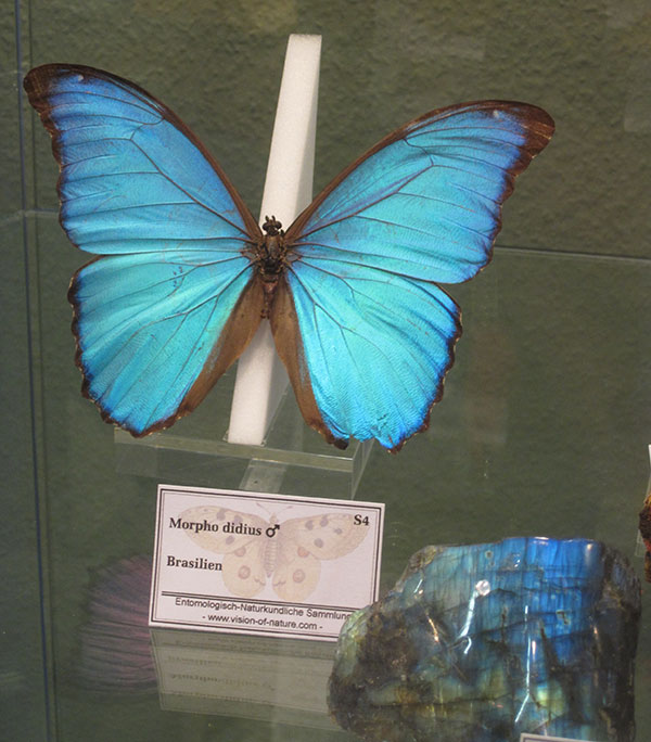 Butterfly and Mineral photo image